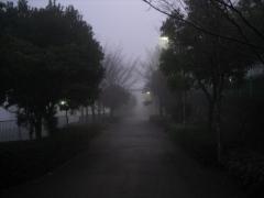 朝靄の中 2009年1月22日
